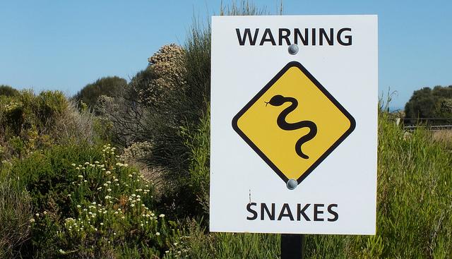 осторожно: змея