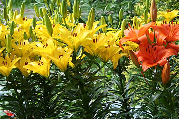 цветы -символ любви