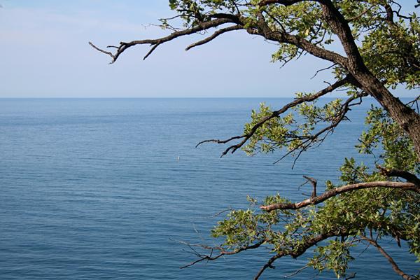 Крым море и сосны