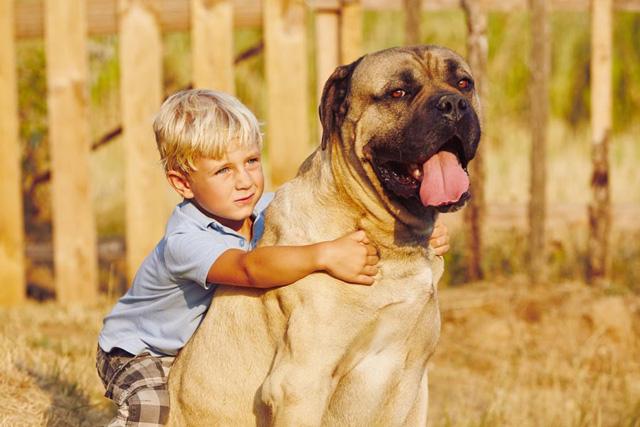 Собака для детей: лучшие породы