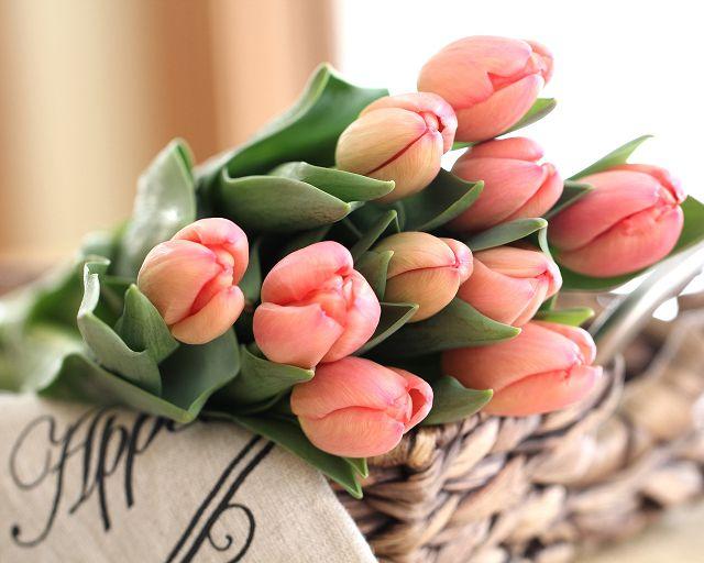 фото тюльпан цветок