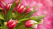 Что обозначает тюльпан назагадочном цветочном языке?